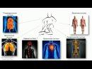 Как работает массаж (механический фактор) | Урок 3, часть 1 | Обучение массажу