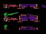 5 Строение и работа клеток сердца Влияние симпатических нервов на активность миозина