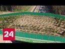 Скорость Экодук Специальный репортаж Рамаза Чиаурели