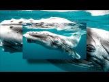 Всемирный день китов и дельфинов! World Whale and Dolphin Day!