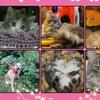 ВЫРИЦКИЕ ПОДКИДЫШИ-Кошки Котята Собаки Щенки