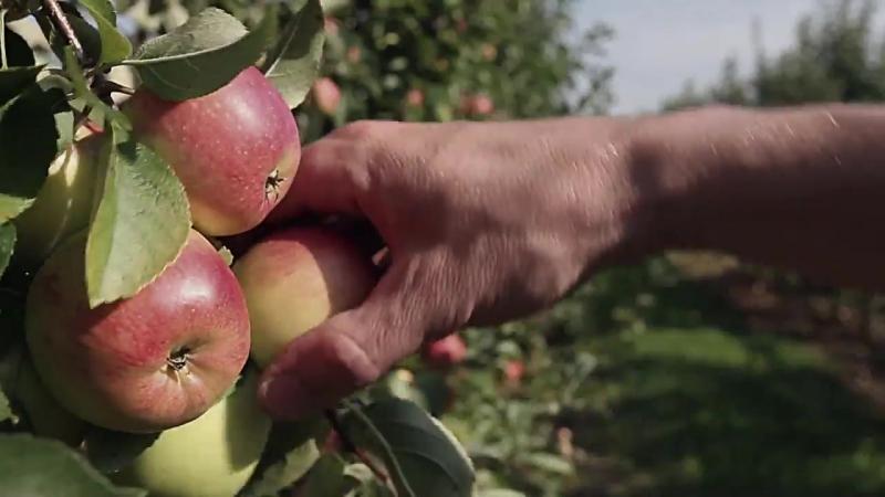 Праця аграрія – одна з найважливіших на Землі