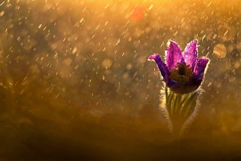В тот момент, когда вы перестанете судить, в тот момент, когда вы перестанете смотреть на ошибки и недостатки других, вы начнете любить каждого по-настоящему.