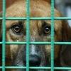 Вы-их последняя надежда! Помощь животным приюта
