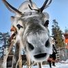 Поездки в Финляндию!!! Великий Новгород