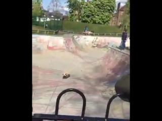 Собакен на скейте