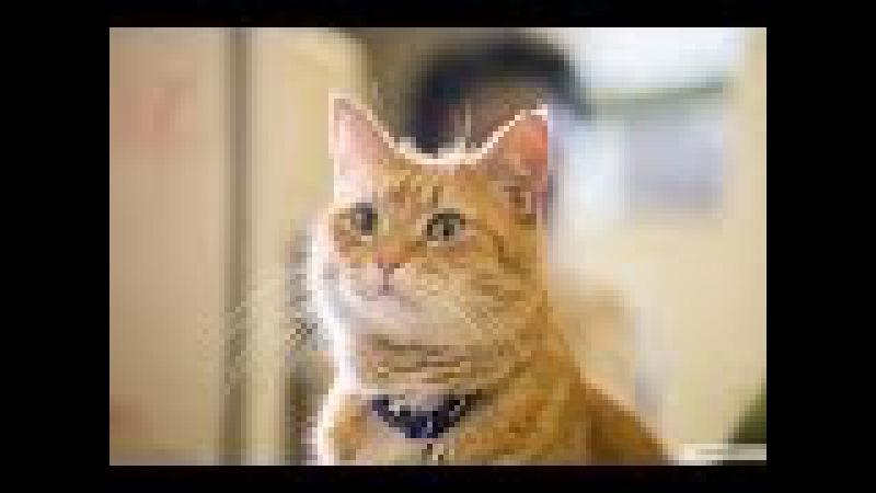 Уличный кот по кличке Боб (2016) На реальных событиях