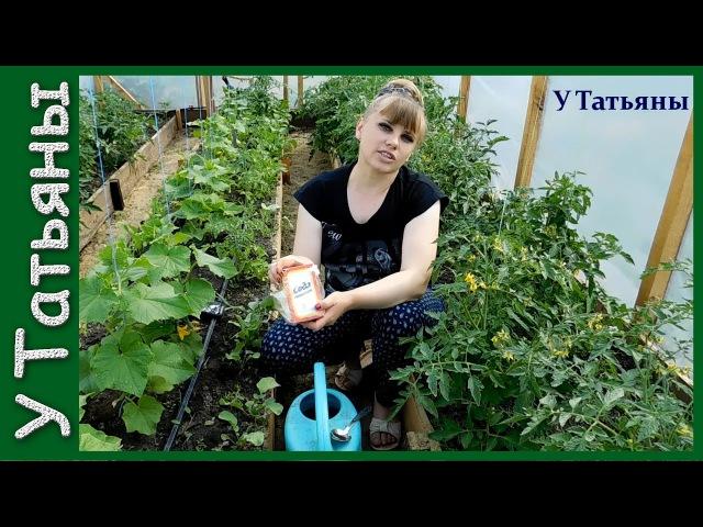 СОДА спасатель вашего огорода Пищевая сода подкормка для огурцов томатов и других растений