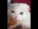 Кот ест круассан вместе с хозяином