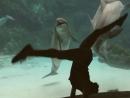 Девушка рассмешила дельфина