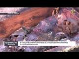 В Турции во время строительных работ обнаружили гроб с русским генералом