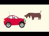 Бибика-Комнатные звери