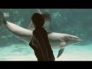 Девушка развлекает дельфинов