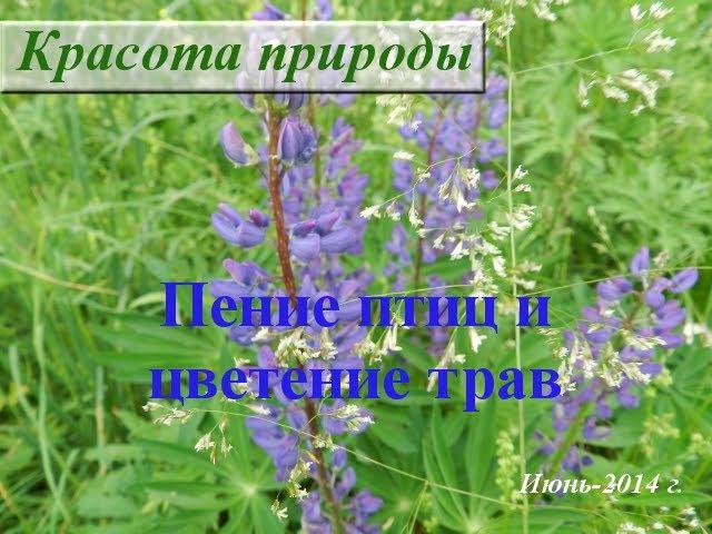 Звуки живой природы. Пение птиц и цветение трав. Июнь-2014