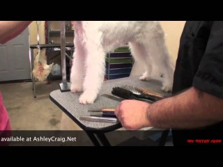 Grooming the Wire Fox Terrier Part 1