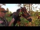 Сезонные травмы глаз у лошадей. Репьи. Как избежать бельма.