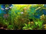 обслуживание аквариума или чистота залог здоровья!