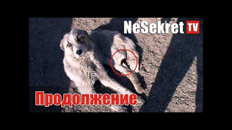 Собака с оторванной лапой. Продолжение. Город Улан-Удэ.