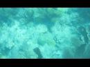 More Looe Key Reef Snorkeling