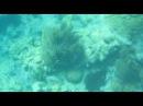 Snorkling at Looe Key FL Underwater Ballet