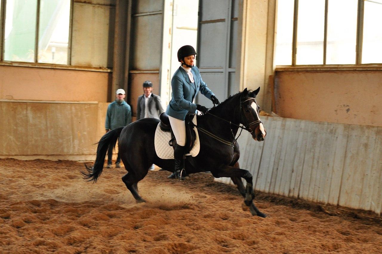 Торжественное открытие КСК ДГТУ «Ход конем»