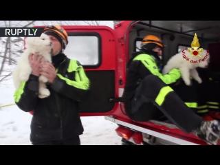 Трёх щенков спасли из накрытого лавиной отеля в Италии