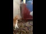 Кот-убийца по кличке Лёва