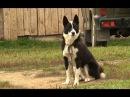 Русско европейская лайка Планета собак 🌏 Моя Планета