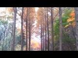 Vivaldi - Violin Concerto No.6 in a minor, RV 356, Op.3 II. Largo (Christopher Hogwood)