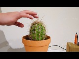 Sound Cactus from Sonic Succulent Series