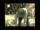 Наш сад Не спешите удалять старые деревья
