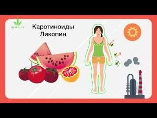 Антиоксиданты   природные источники продления молодости клеток