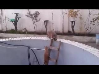 Кот упал в бассейн