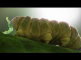 Tardigradia – The Wild Little World - by (IMA) Industrial Motion Art