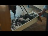 Зоология (2016) - трейлер