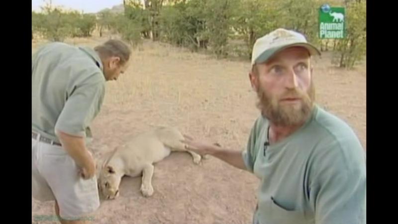 BBC «Заповедник в дебрях Африки» (22 серия) (Реальное ТВ, животные, 2006)