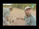 BBC Заповедник в дебрях Африки 22 серия Реальное ТВ животные 2006