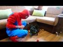Видео, в котором Игорек и Богдан лечат человека паука=