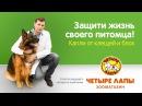 Советы ведущего ветеринара «Четыре Лапы». Капли от блох и клещей.