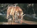 william blake - tiger tiger
