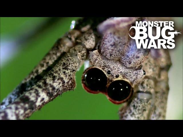 MONSTER BUG WARS | Ogre Spider Vs Assassin Bug