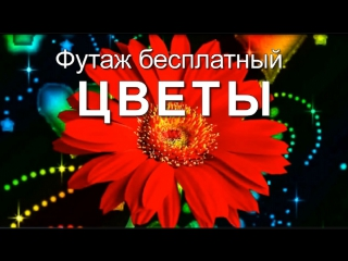 Цветы. Футаж бесплатный