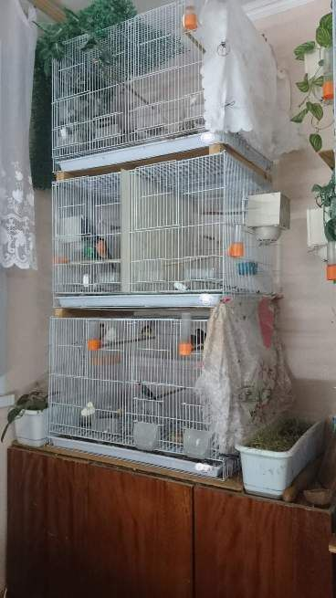 "Фотографии ""птичей комнаты""  - Страница 3 I4dfDkm7RwA"