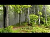 Прогулка по летнему лесу. Лучшая музыка для души.Relax