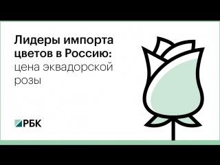 Лидеры импорта цветов в Россию: цена эквадорской розы