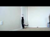 87 Самые умные коты. Сообразительные кошки (с 10_01 чёрный экран)