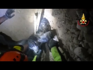 Firefighters Free Trapped Dog Who Survived Under Earthquake Rubble Overnight