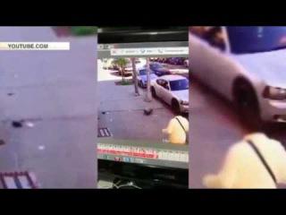 Женщина использовала собаку, как карусель, чтобы отбиться от бешеного кота