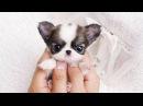 Забавные и Милые Собаки и Щенки. Очень милое видео!