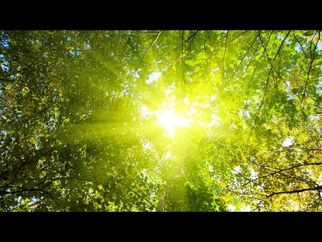 Sunshine - Mary Voit